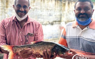 Fish Stories: Lessons for a World Caught in a Grisly Pandemic